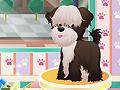 Собачий салон